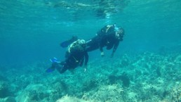 padi scuba dive courses - reef exploration