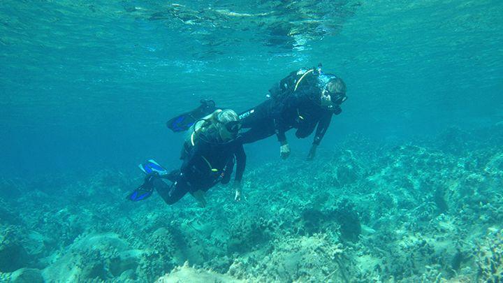 padi scuba dive courses - reef exploration
