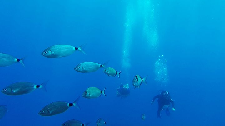 padi open water diver scuba certification- Navys