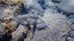 Santorini volcanic reef padi scuba certification