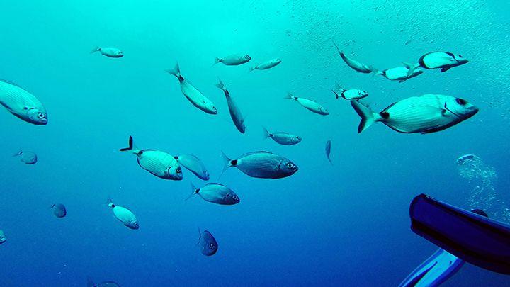 Santorini sealife padi scuba certification