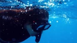 Santorini snorkeling experience Navys waterworld