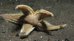 Starfish night dive santorini