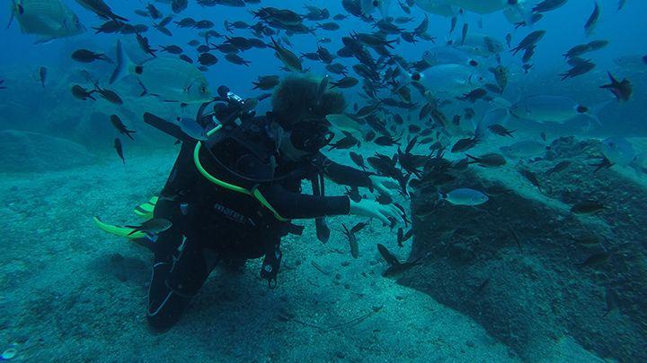 santorini private tours snorkeling spots