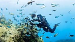 Diver in Santorini volcanic reef