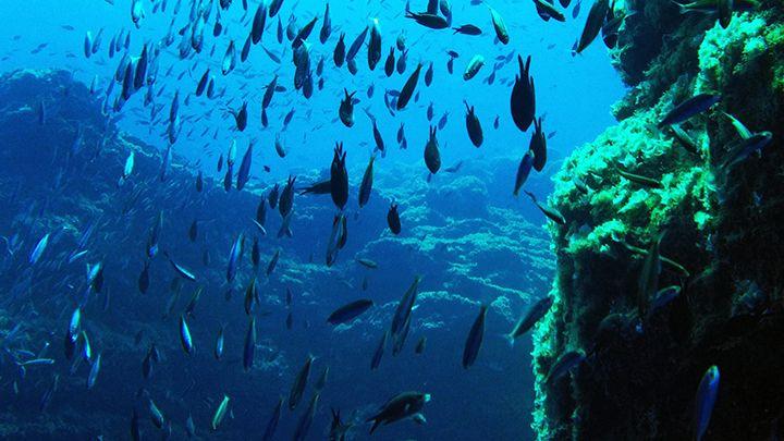 Santorini's underwater treasures santorini excursions divespots