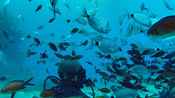 Scuba diving first time - Sealife of Santorini