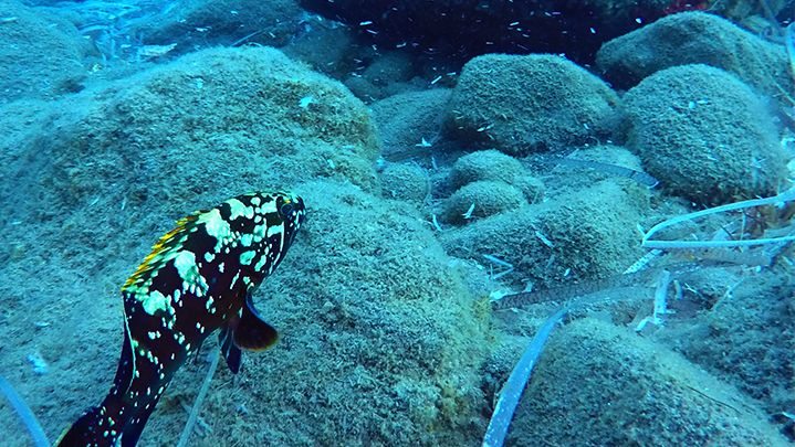 scuba diving first time Reef exploration in Santorini island