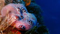 Santorini reef coral