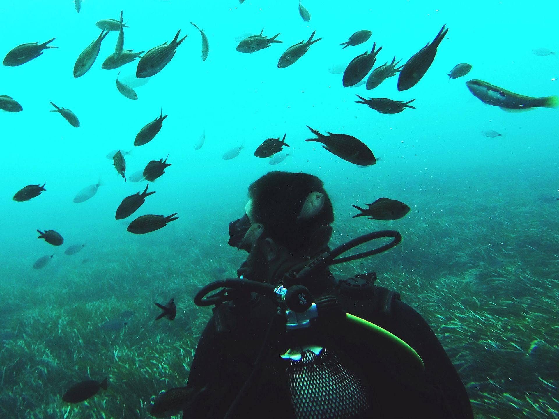 PADI deep diver - Santorini scuba diving sealife